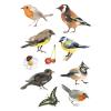 Herma 3351 DECOR Sticker - Aquarell Vögel - 30 Sticker
