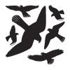 Herma 5999 DECOR Fensterbild - Warnvögel - 30 x 30 cm - wetterfest