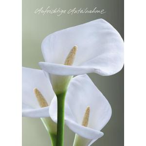 Komma3 Trauerkarte weiße Callas  Aufrichtige...